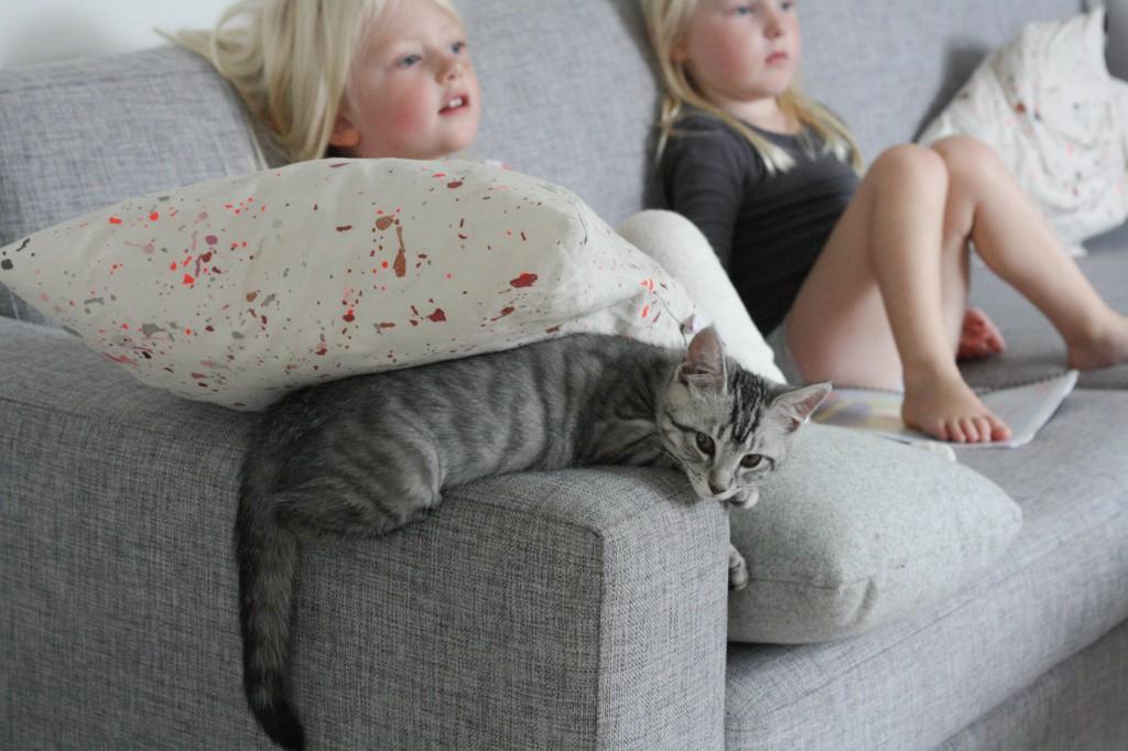 Små ting kat 2