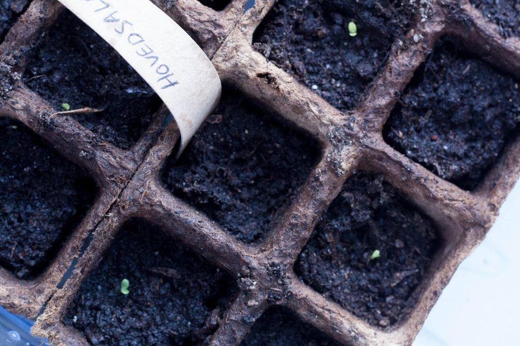Små spirer og hjælp til planterne