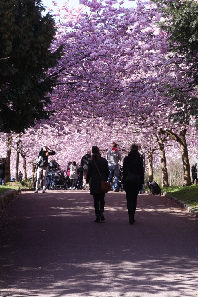 Pastelfarvet lykkestund på Bispebjerg Kirkegård