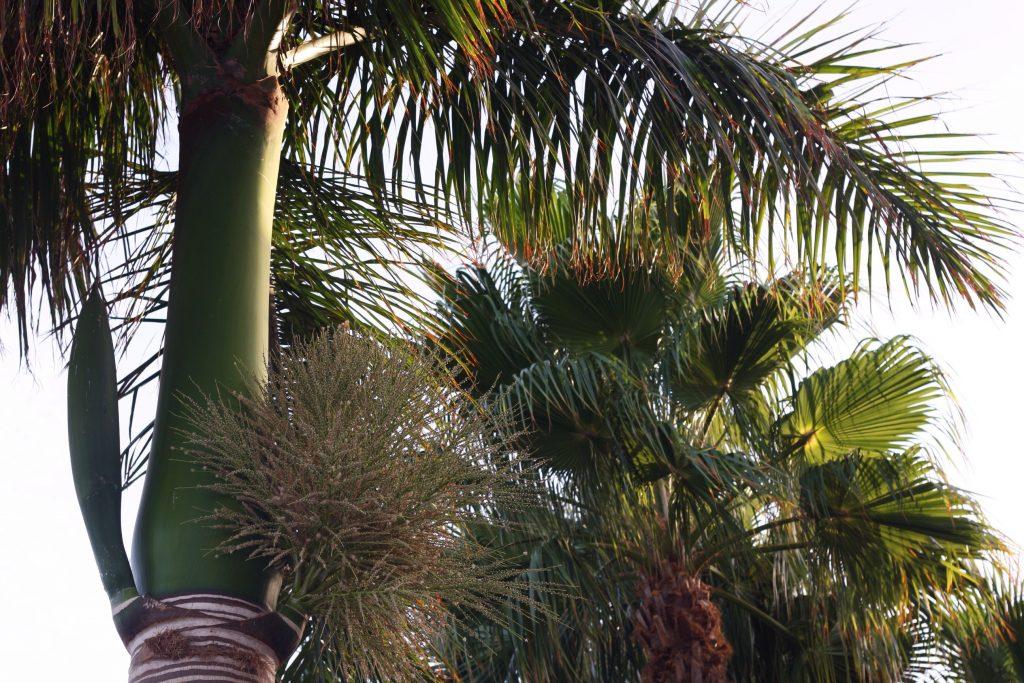 Indretning med palmer, kaktusser og andet grønt